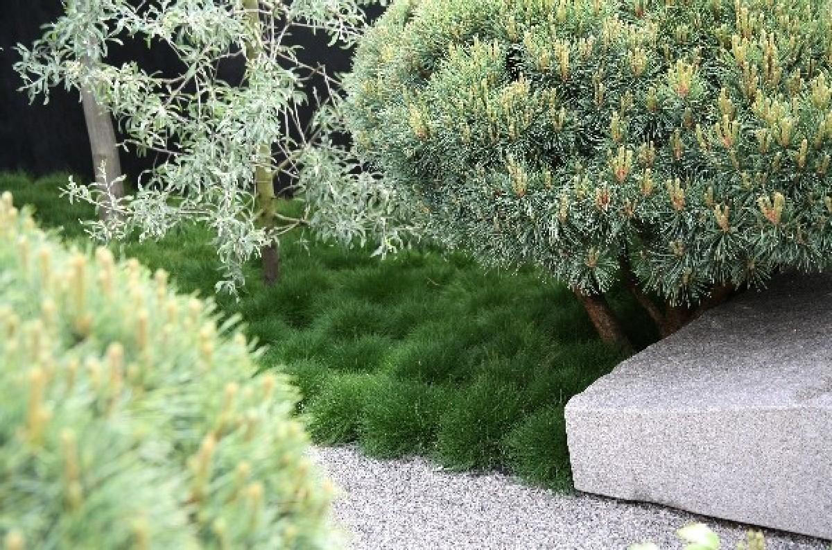 Realizzazione giardini e terrazzi milano varese e como - Giardini e fiori ...
